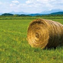 ТРЕВНА СМЕСКА ЗА ПАША с дражирани (обвити) семена RUSA 10 KG
